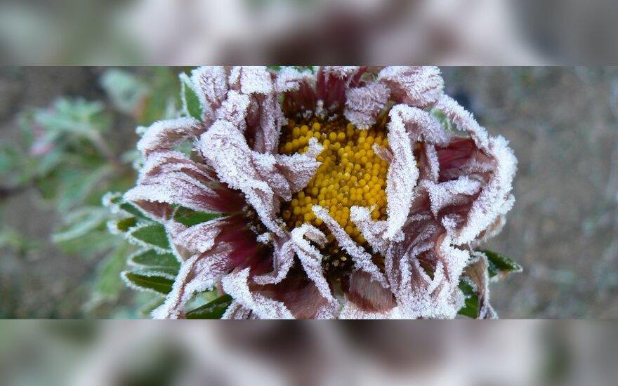 Синоптики: заморозки могут наблюдаться до июня