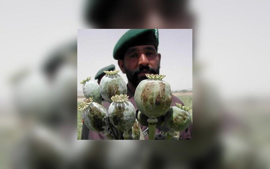Pakistano karys laiko pluoštą aguonų, iš kurių gaminamas opiumas. Pakistano pajėgos pirmadienį sunaikino aguonų laukus netoli Afganistano sienos.