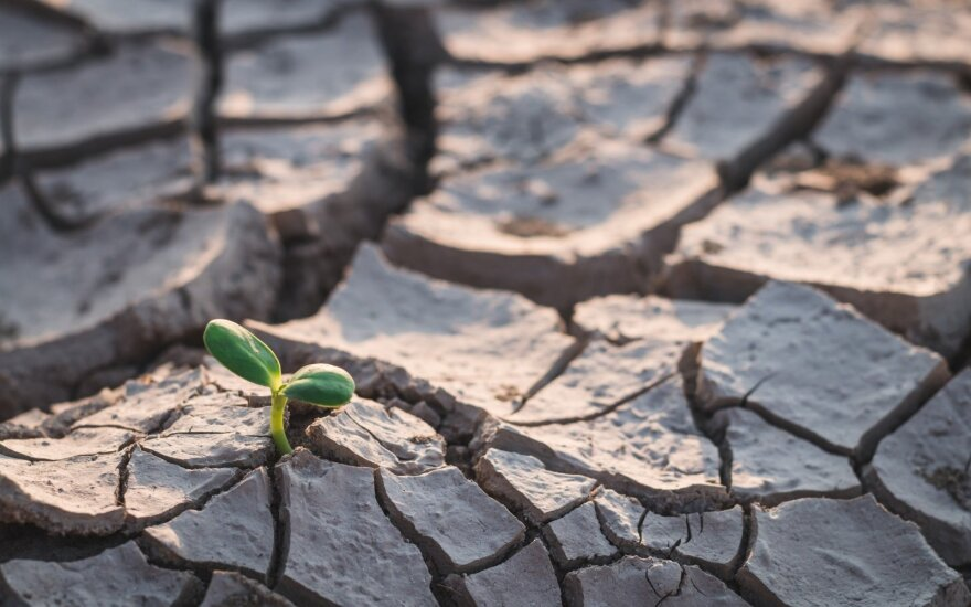 Юг Литвы истязает стихийная засуха