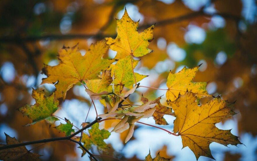 Прогноз климатолога: после теплого лета осень преподнесет сюрприз