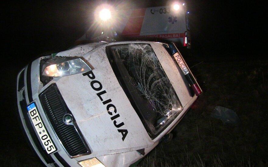 Перевернулся полицейский автомобиль, объезжавший сбитую лису