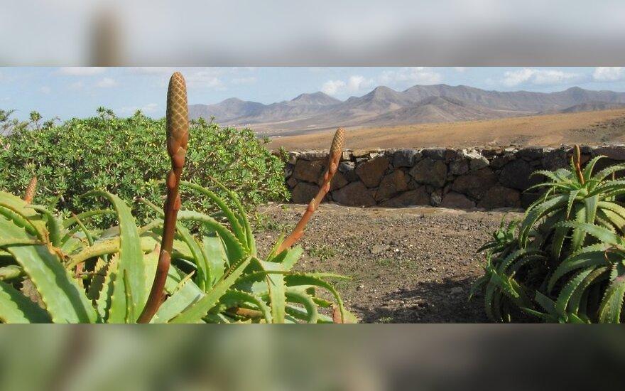 Fuerteventūra, Kanarų salos