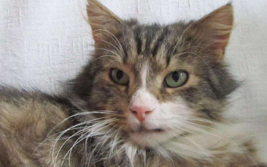 На юге Франции более 200 кошек отравлены неизвестным ядом