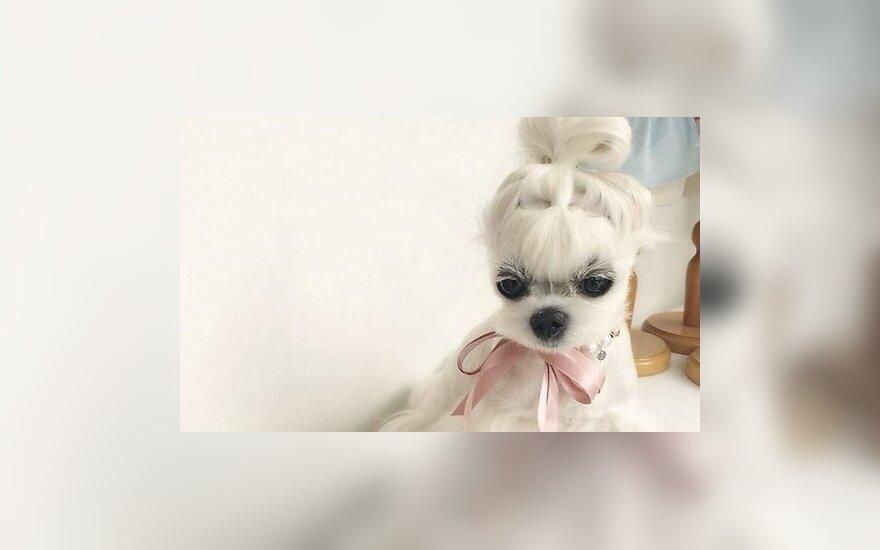 ФОТО: Болонка модница очаровала пользователей соцсетей