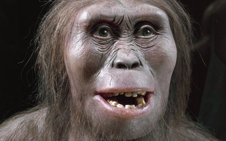 Описаны подробности смерти предка человека по имени Люси