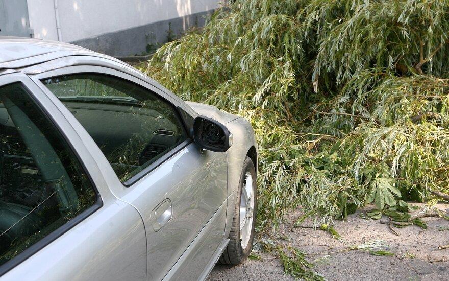 Radvilėnų plente ant automobilių nuvirto medis