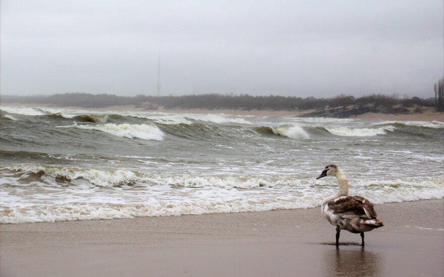 Погода в Литве становится все более неприятной: ветер и дождь