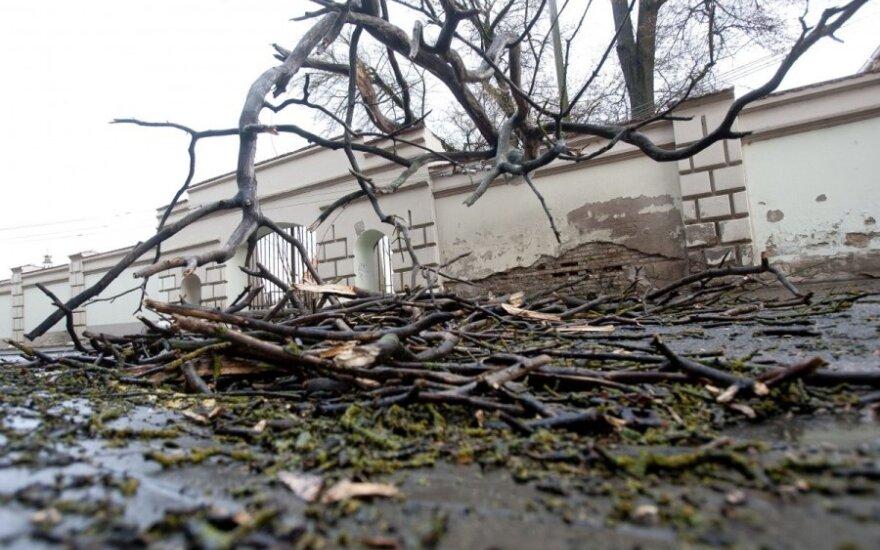 Сильный ветер ночью повалил больше 100 деревьев