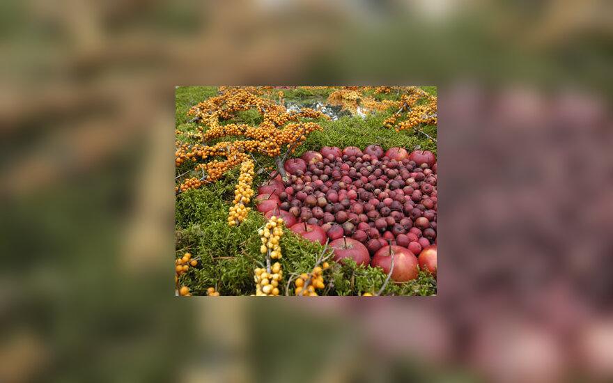 """""""Kilimas"""" iš vaisių ir uogų"""