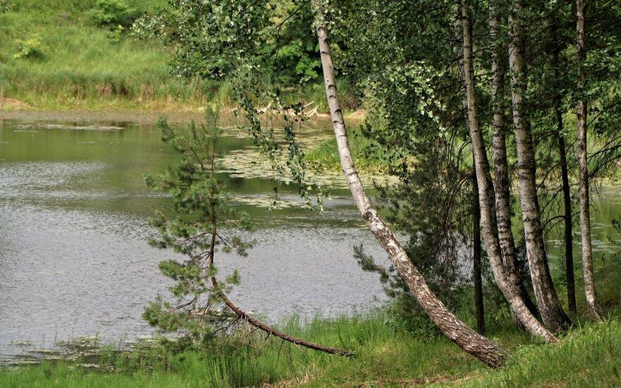 Tvenkinys vasarą