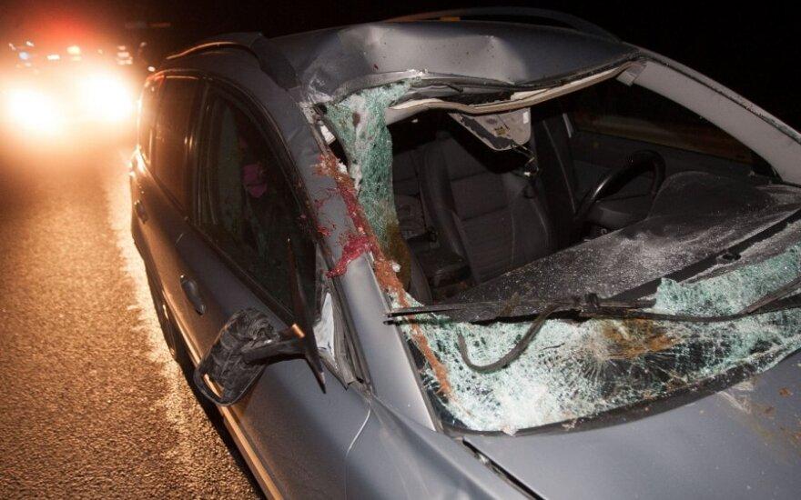 На окраине Вильнюса автомобиль сбил коня
