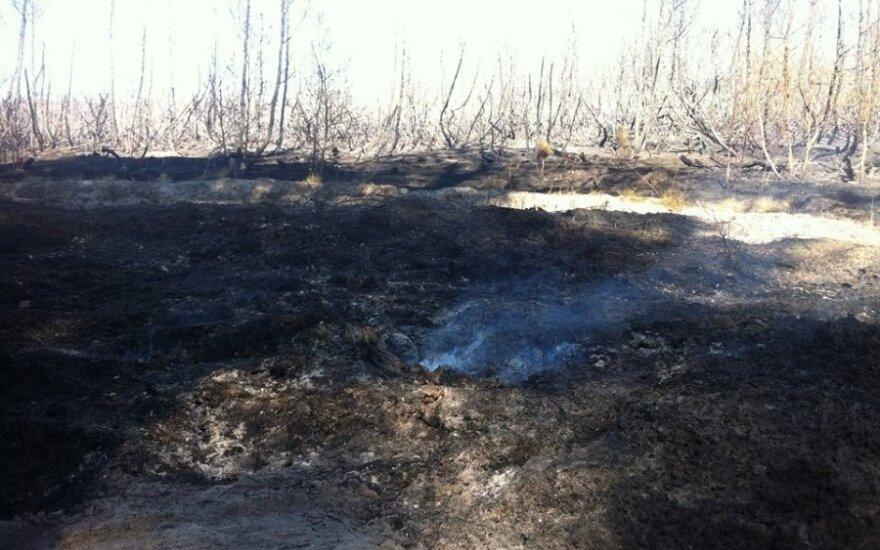 Išdegęs miškas Kuršių nerijoje