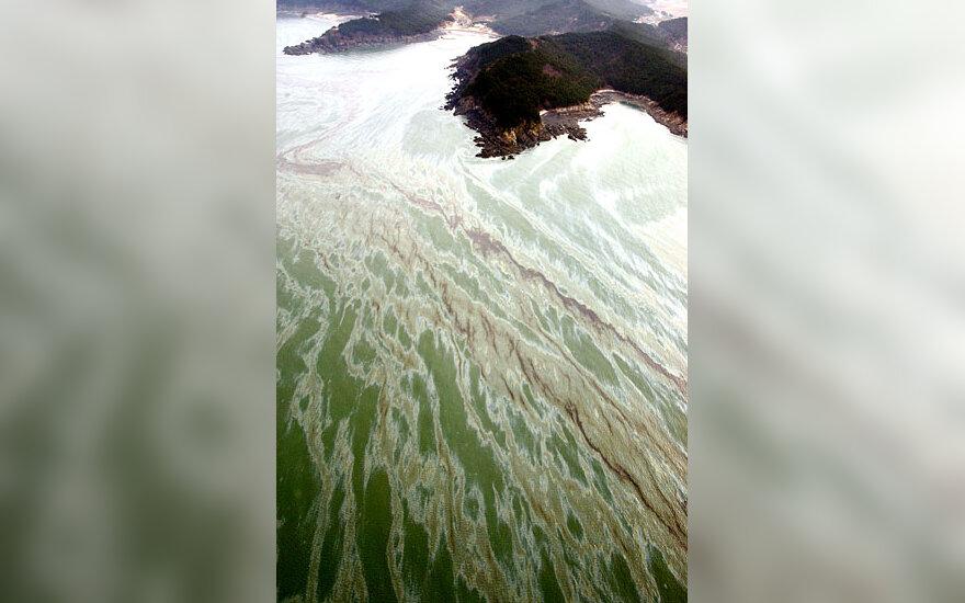 Nafta užterštas vanduo