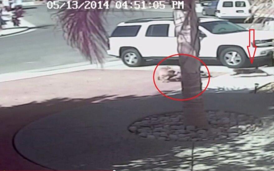 Kot ratuje chłopca przed atakiem psa