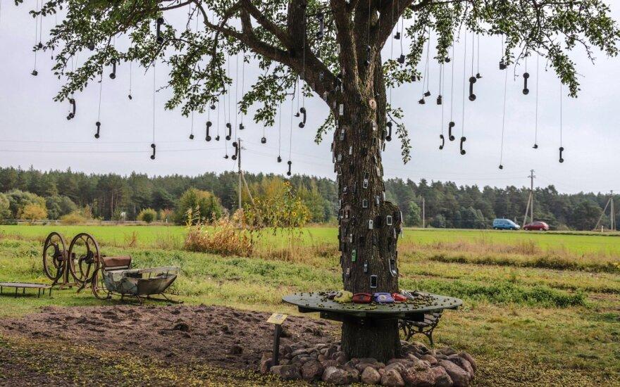 """В Паневежском районе появилось """"телефонное"""" дерево"""