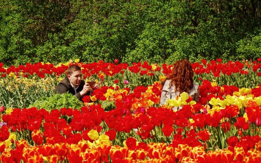 Tulpių žydėjimas Burbiškio dvaro sodyboje 2020