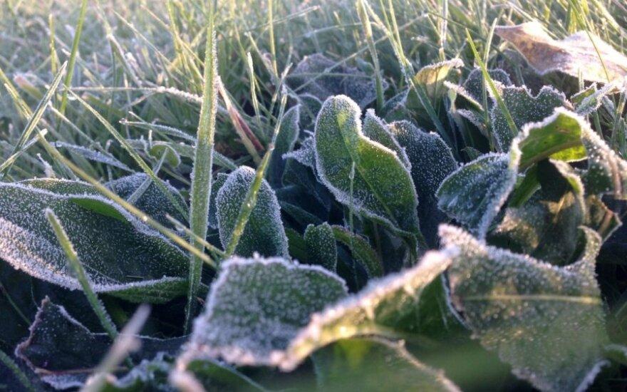 В Литве зафиксировали рекордный холод: побит 70-летний рекорд
