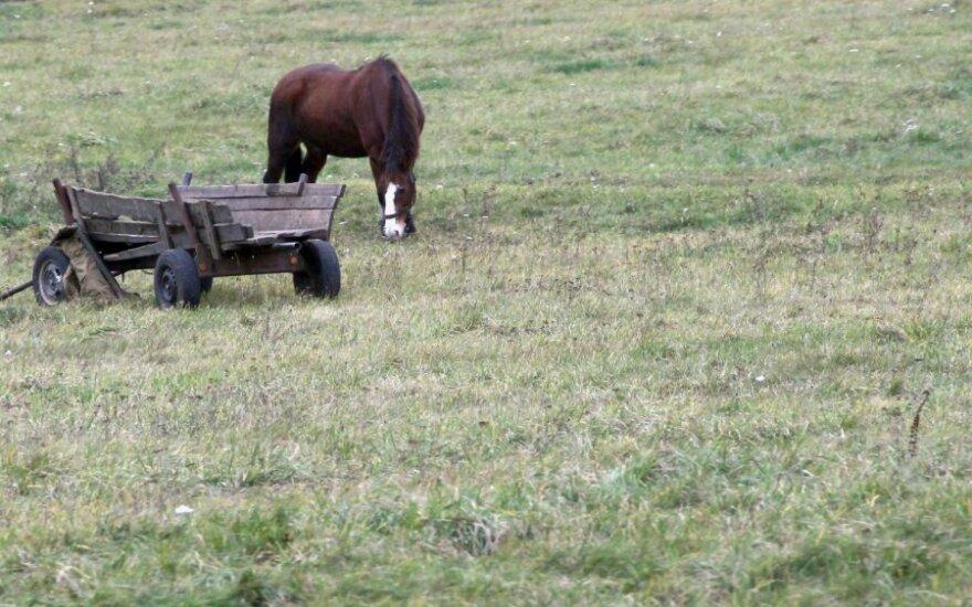 Фермер зверски замучил 13 лошадей