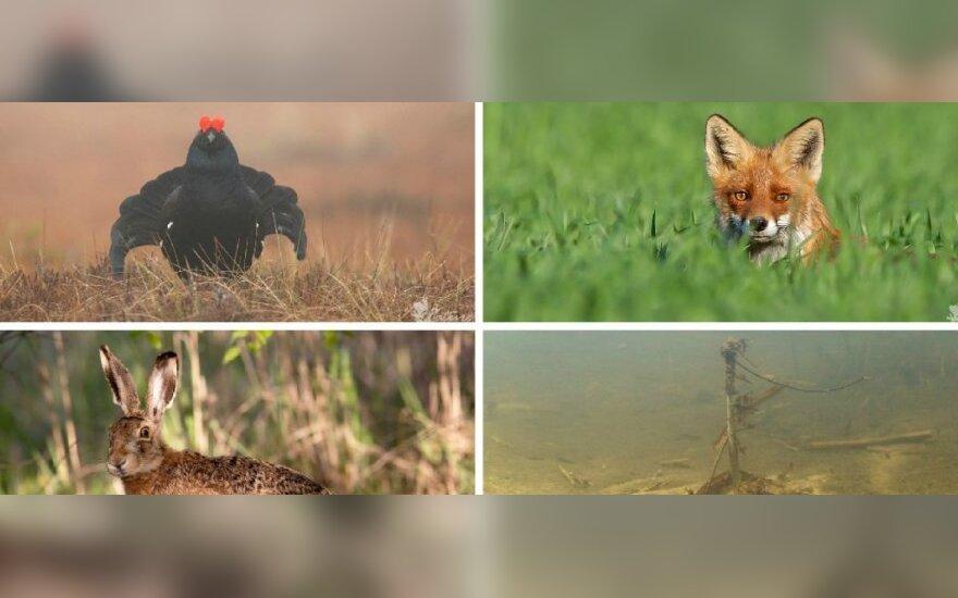 Gamtos fotografų užfiksuoti kadrai