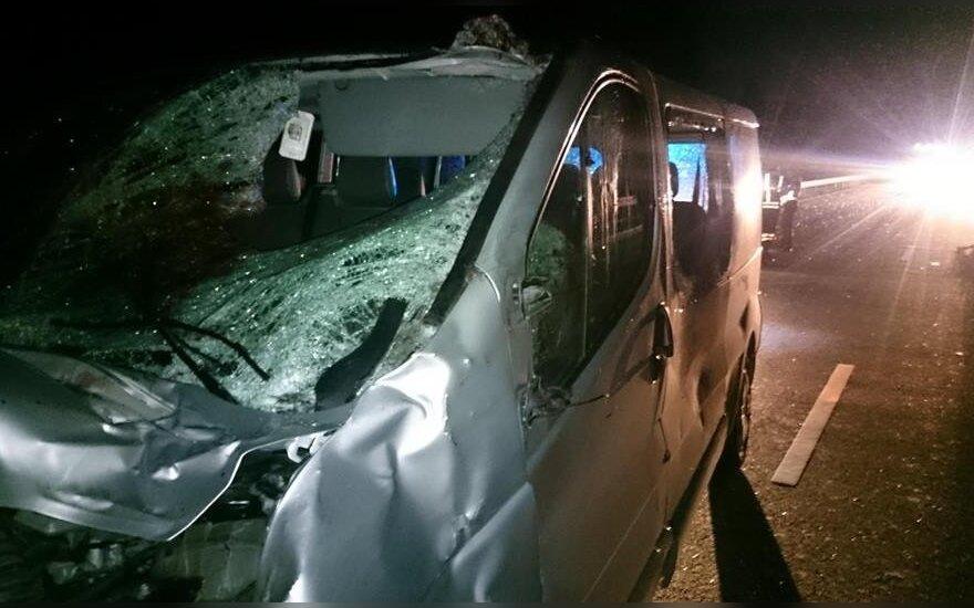 В Шяуляйском районе лось выскочил на дорогу, водитель в клинике