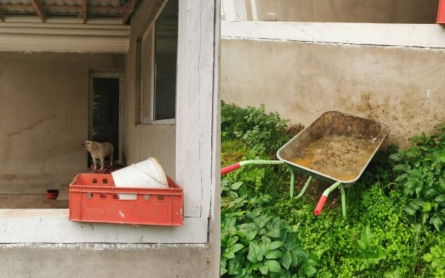 Šunų daugykla Tauragės rajone