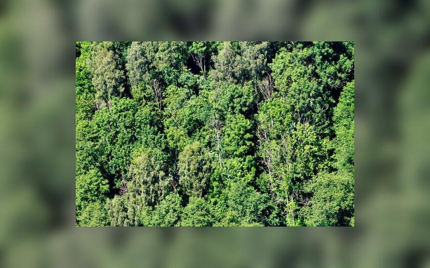 В Швеции открылся отель с номерами на деревьях