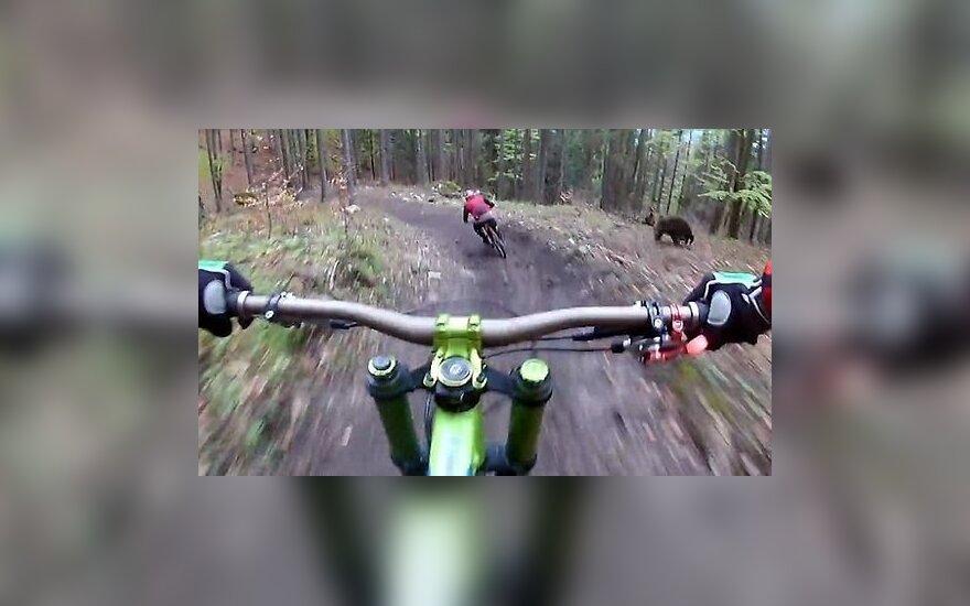 Как медведь напугал велосипедистов в Словакии