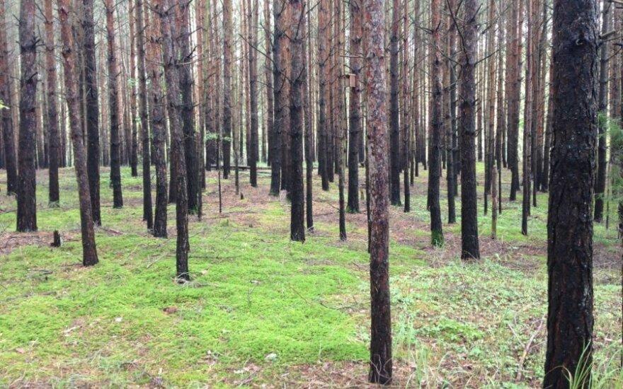Под Тюменью найдены пять убитых лесорубов