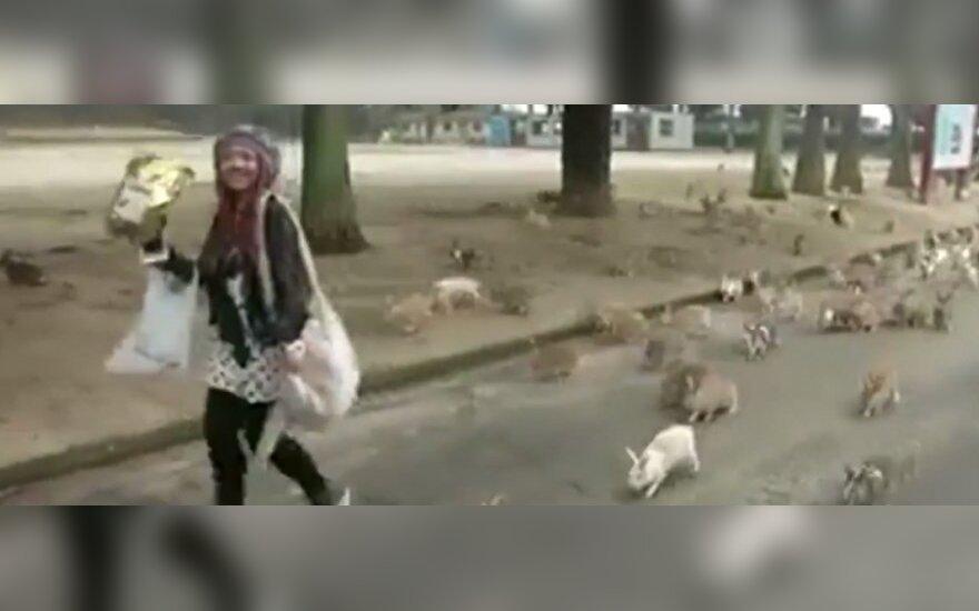 Inwazja królików