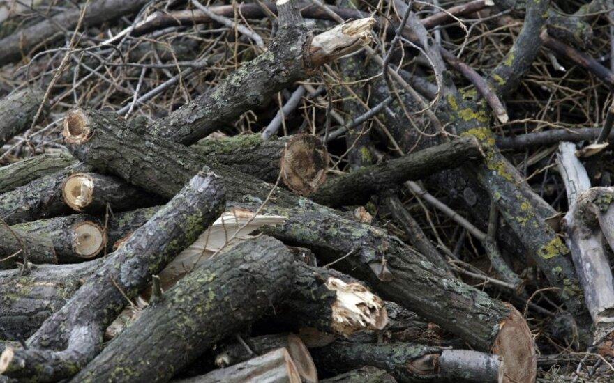 Разрешена вырубка деревьев на Нидском аэродроме