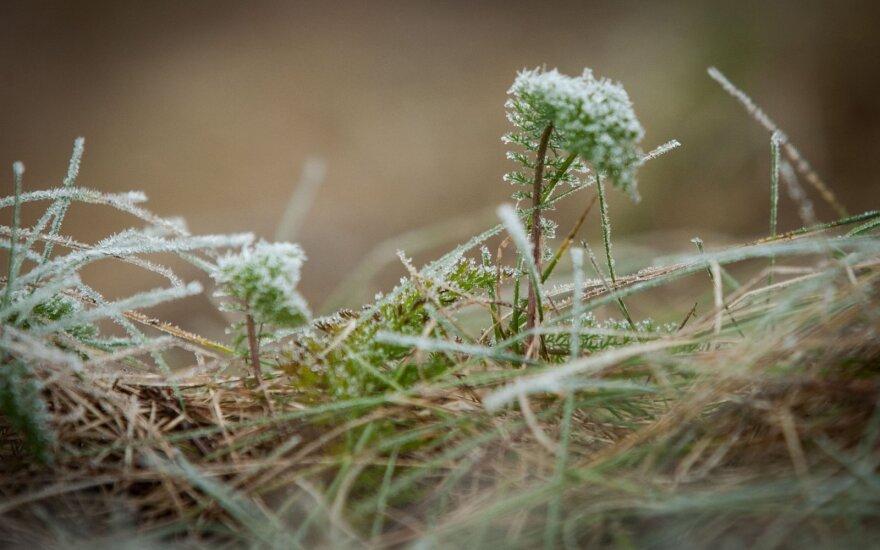 Зима не за горами: температура снизится до 0