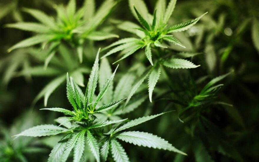 Bloomberg составил индекс доступности наркотиков в разных странах мира. Литва почти в конце списка
