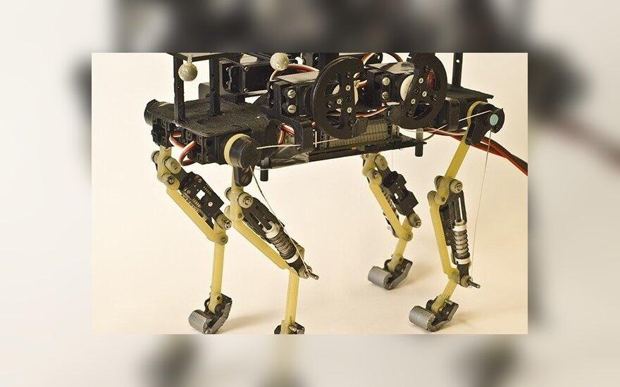 В Швейцарии сконструировали робота-кота