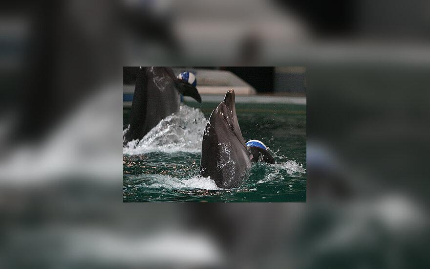 Delfinų treniruotė
