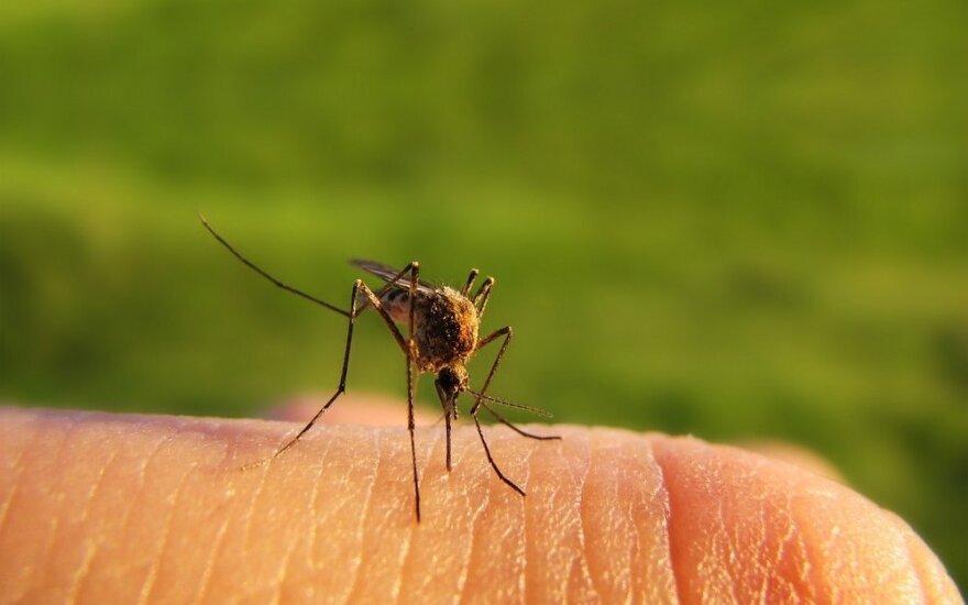 Если вы ждете ребенка - приготовьтесь к нападению комаров: почему беременные чаще привлекают кровососов