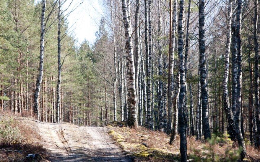 В лесу Тельшяйского района обнаружена взрывчатка