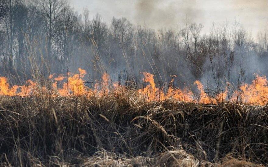Памятка сжигания старника: что разрешено, а что нет