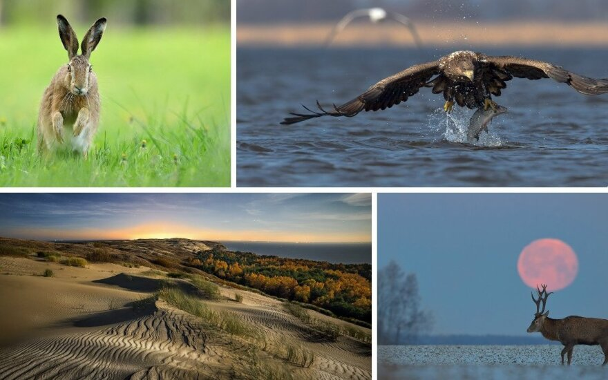 Geriausios Lietuvos gamtos fotografų 2015-ųjų nuotraukos