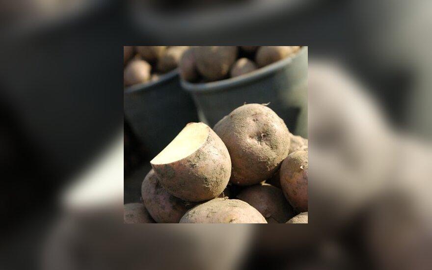 Цены на овощи в Литве подскочили, но их могут сбить поляки