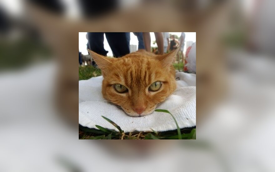 USA: Kot już 15 lat rządzi miasteczkiem