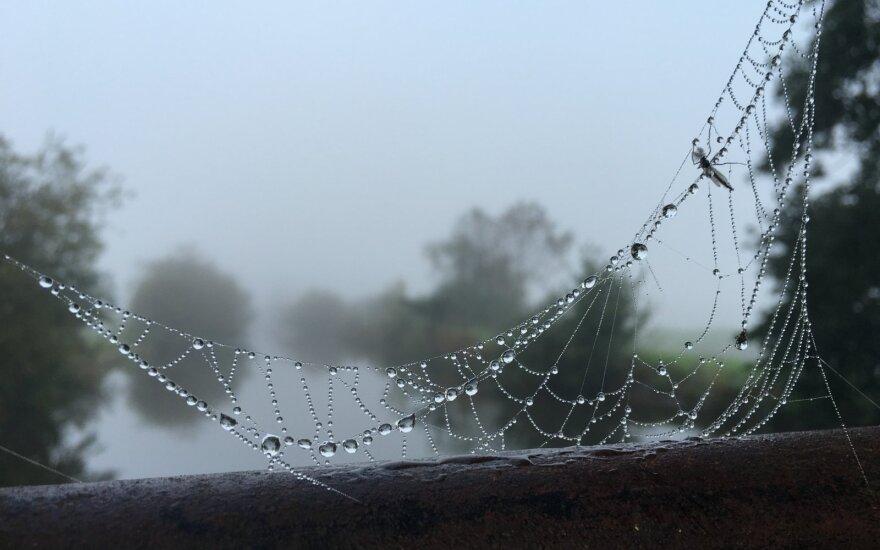 Приветствие осени: погода изменится в выходные, а конец месяца преподнесет сюрприз