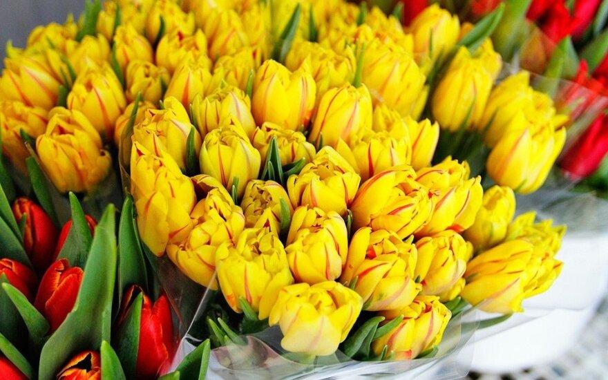 """Литве """"Подарок столетнего юбилея"""" – луковицы тюльпанов из Нидерландов"""
