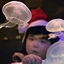 Vaikas žiūri į medūzas akvariume