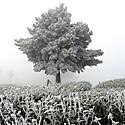 Žiema, sniegas, šaltis, šalna