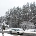 Mišką nuklojo sniegas