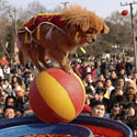 Kinai švenčia Naujuosius metus