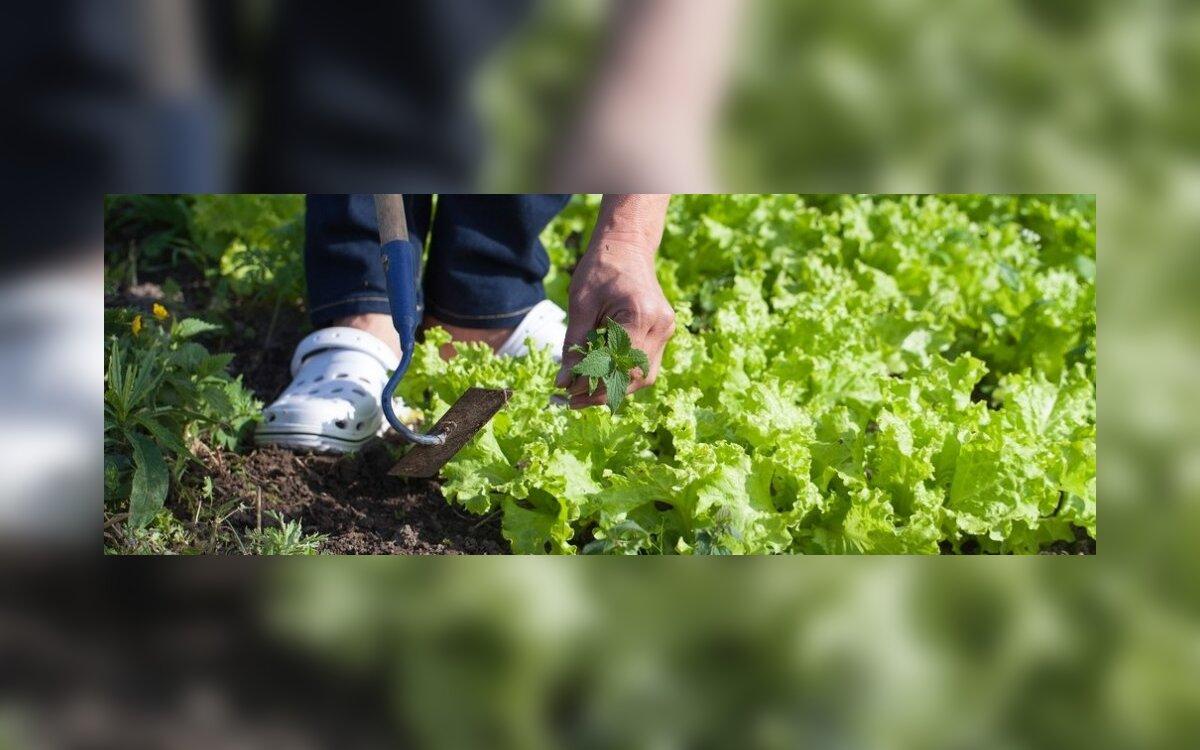 gerti sodą nuo hipertenzijos