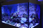 """""""Statyba Jums"""": kaip pasirinkti tinkamą akvariumą"""