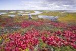 Klimato atšilimas Sibiro tundroje