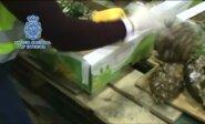 Portugalijos policija konfiskavo 750 kilogramų kokaino, paslėpto ananasuose